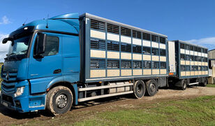 ciężarówka do przewozu bydła MERCEDES-BENZ Actros 2548 for pigs transport + przyczepa do przewozu zwierząt