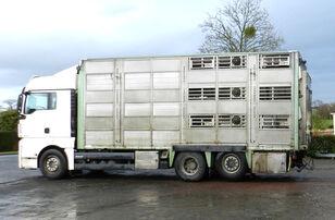 ciężarówka do przewozu bydła MAN TGX 26.520