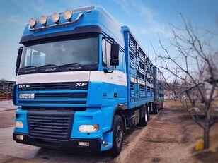 ciężarówka do przewozu bydła PEZZAIOLI + przyczepa do przewozu zwierząt