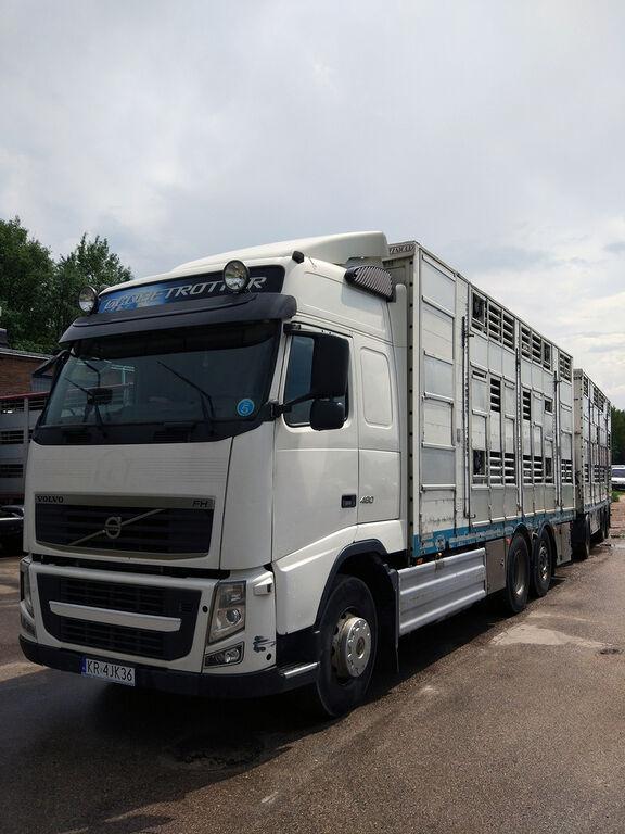 ciężarówka do przewozu bydła VOLVO FH460 XL,3 stock,Pezzaioli,T2,Service + przyczepa do przewozu zwierząt
